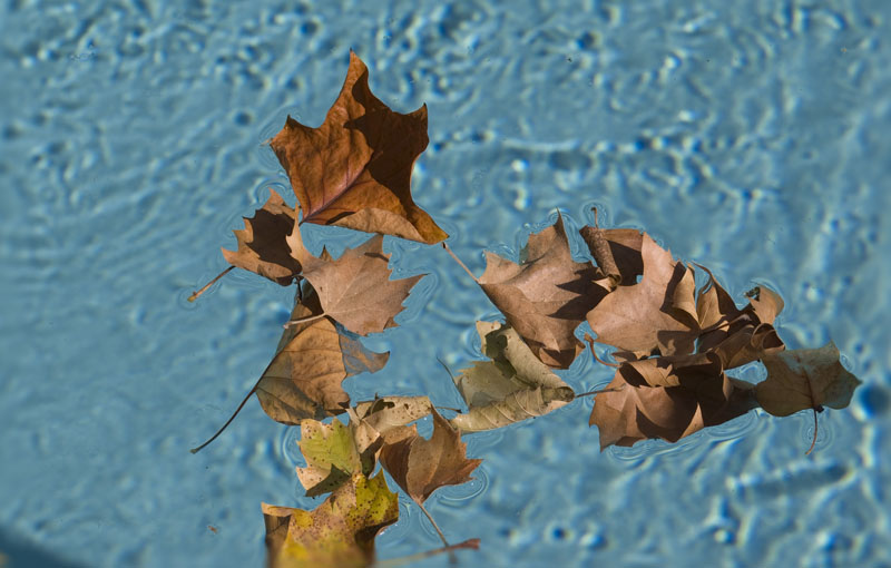 leaves_on_water1